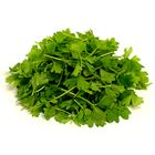 Picture of MICRO CELERY PUNNET (48 HOUR NOTICE)
