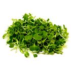 Picture of MICRO TATSOI PUNNET (48 HOUR NOTICE)