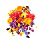 Picture of EDIBLE MIXED FLOWERS PUNNET (48 Hour Notice)